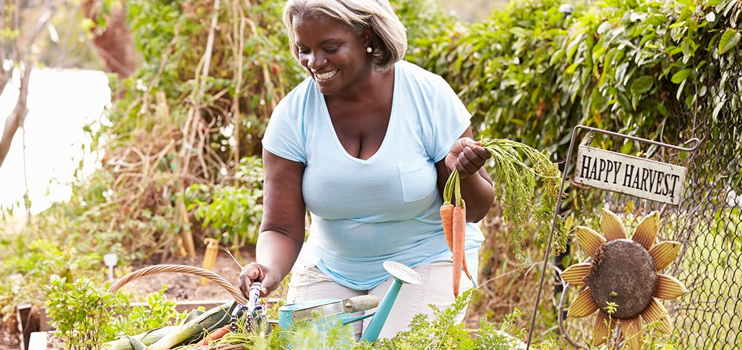 senior woman gardening with carrots in her hand